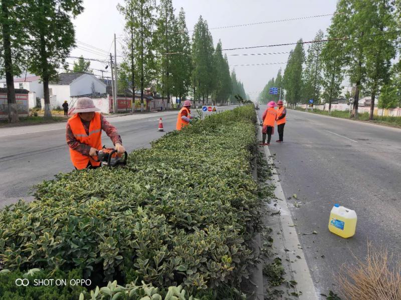 为公路绿化整形 扮靓路域环境