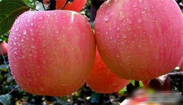 徐州丰县苹果文化节 旅游+助推产业经济发展