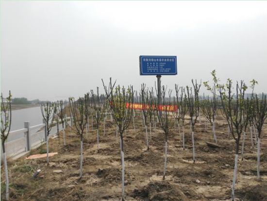 丰县水务局高标准完成河道绿化任务