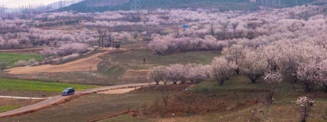 圣人窝村:赏花经济美了山村 富了乡亲